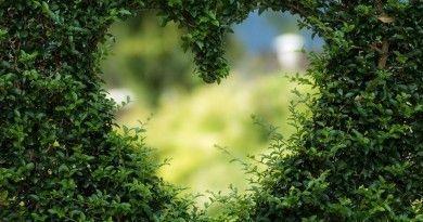 tarot del amor si o no tarotistasvidentes.es